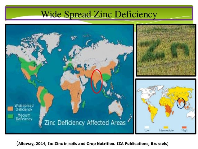 Breeding for biofortification in cereals for Soil zinc deficiency