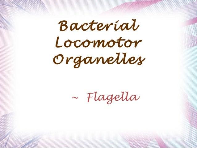Bacterial Locomotor Organelles ~ Flagella
