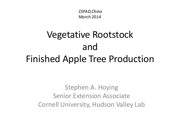 Vegetative Rootstock and Finished Apple Tree Production Stephen A. Hoying Senior Extension Associate Cornell University, H...