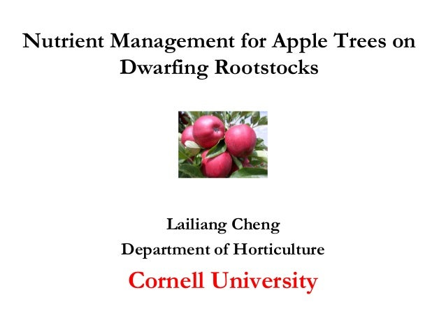Nutrient Management for Apple Trees on Dwarfing Rootstocks Lailiang Cheng Department of Horticulture Cornell University