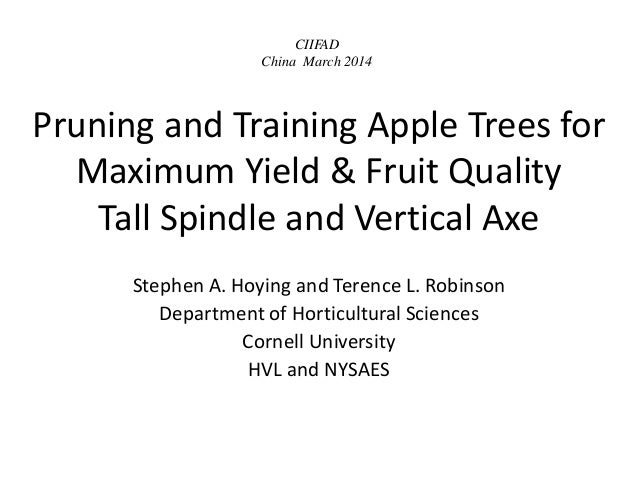 Pruning and Training Apple Trees for Maximum Yield & Fruit Quality Tall Spindle and Vertical Axe Stephen A. Hoying and Ter...