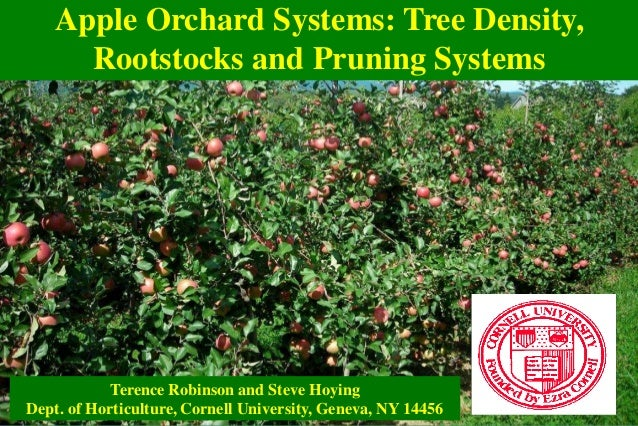 Apple Orchard Systems: Tree Density, Rootstocks and Pruning Systems Terence Robinson and Steve Hoying Dept. of Horticultur...