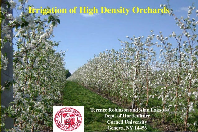 Irrigation of High Density Orchards Terence Robinson and Alan Lakso Dept. of Horticulture Cornell University Geneva, NY 14...