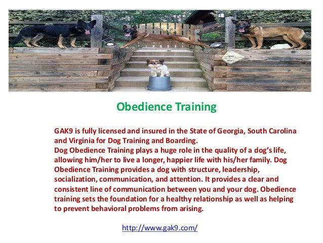 Dog Obedience Training South Carolina