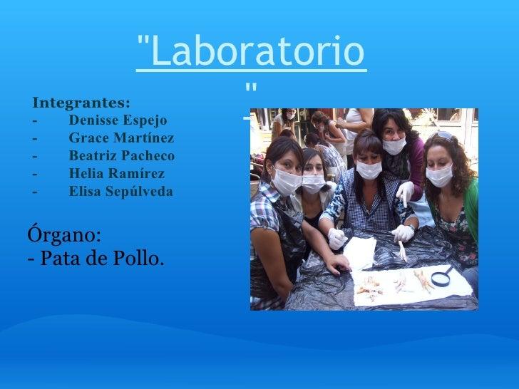 Laboratorio Ciencias Patas de Pollo