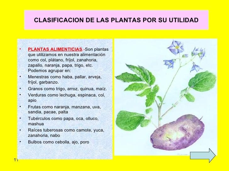 Ppt las plantas for Clasificacion de las plantas ornamentales
