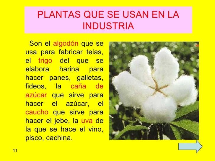 Ppt las plantas for Para que se utilizan las plantas ornamentales