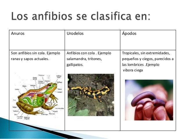 Los parásitos en el intestino de la lamblia el análisis