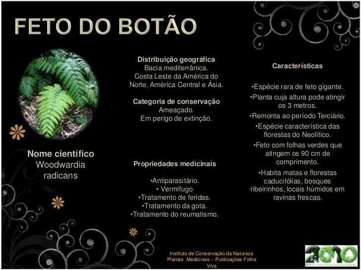 Tem efeitos antiespâsmicos sobre os músculo lisos.</li></ul>Instituto de Conservação da Natureza<br />GreenWorld<br />Bior...