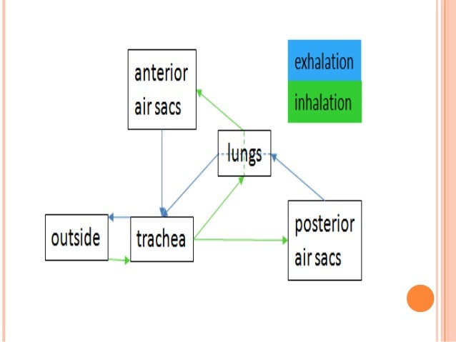 Ppt Respiratory System- Physiology