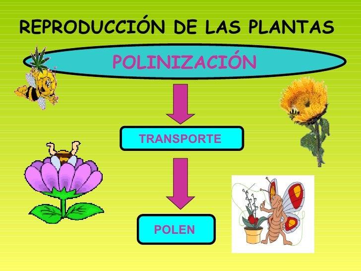 Ppt unidad las plantas - Cosas sobre las plantas ...