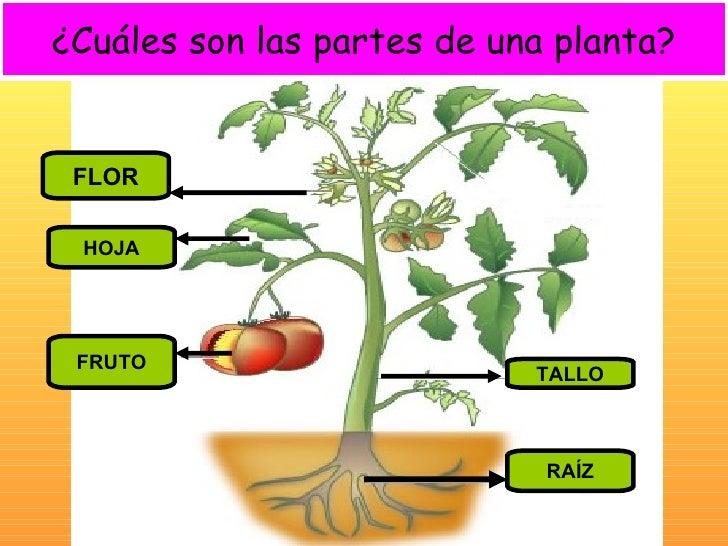 Ppt. unidad las plantas