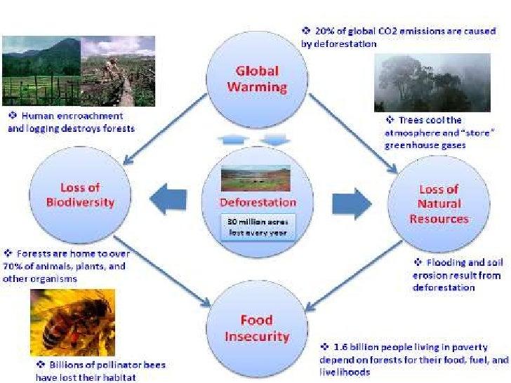 deforestation-21-728.jpg?cb=1354767907