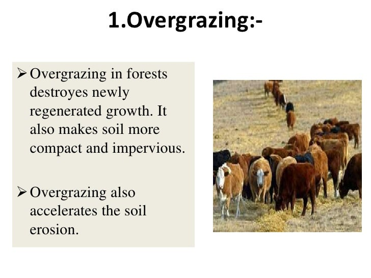 overgrazing over cultivation and deforestation Everest university february 13, 2013 erosion conservation there are  three major causes of soil erosion overcultivation, overgrazing, and  deforestation.