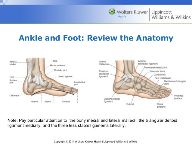 bony landmarks of the foot