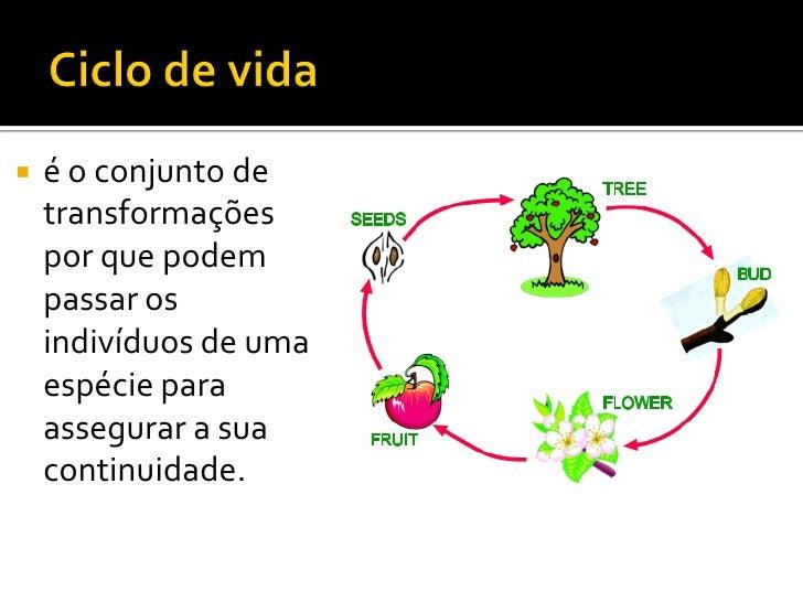 Ppt 18   Ciclos De Vida Slide 2