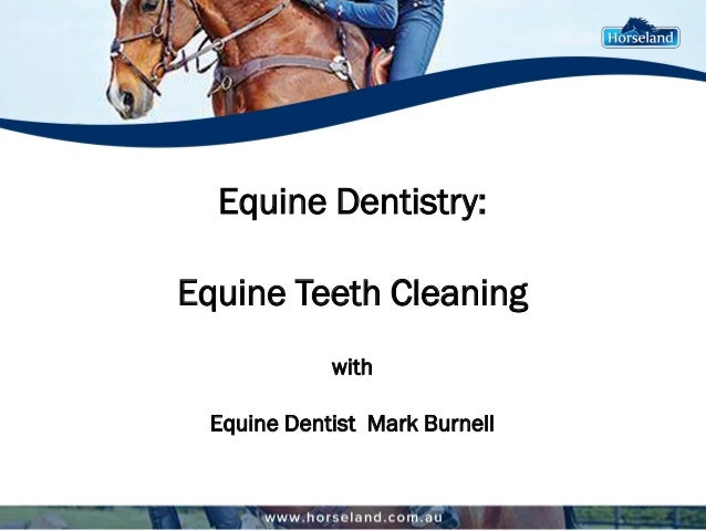 Equine Dentistry: Equine Teeth Cleaning with Equine Dentist Mark Burnell