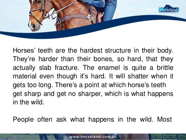 Horses' teeth are the hardest structure in their body. They're harder than their bones, so hard, that they actually slab f...