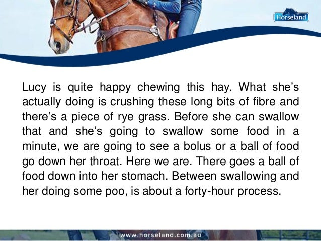 Lucy is quite happy chewing this hay. What she's actually doing is crushing these long bits of fibre and there's a piece o...