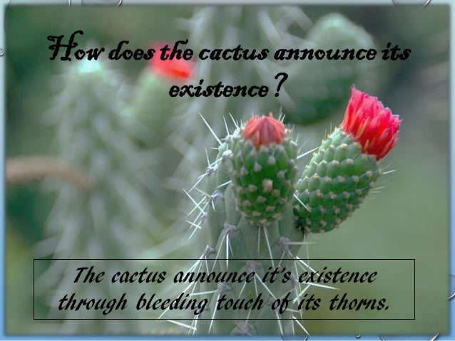 Whom do cactus hate?  Cactus hates lovers who betray.