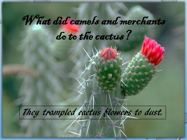 """""""LOOK INTO THE FOLLOWING SLIDE AND SELECT YOUR FAVOURITE THORNY PLANT. YOU HAVE TO WRITE DOWN ITS FEATURES AS WELL AS EXPL..."""