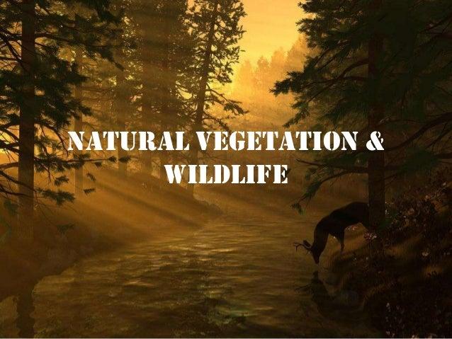 Natural Vegetation & Wildlife