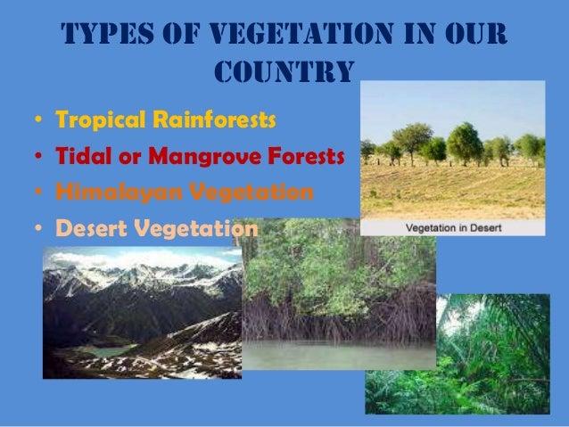 natural vegetation of india wikipedia