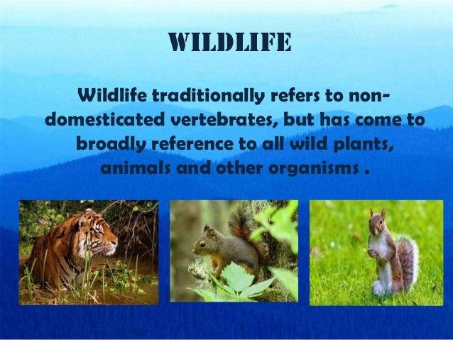 ppt on natural vegetation and wildlife by gursimran singh