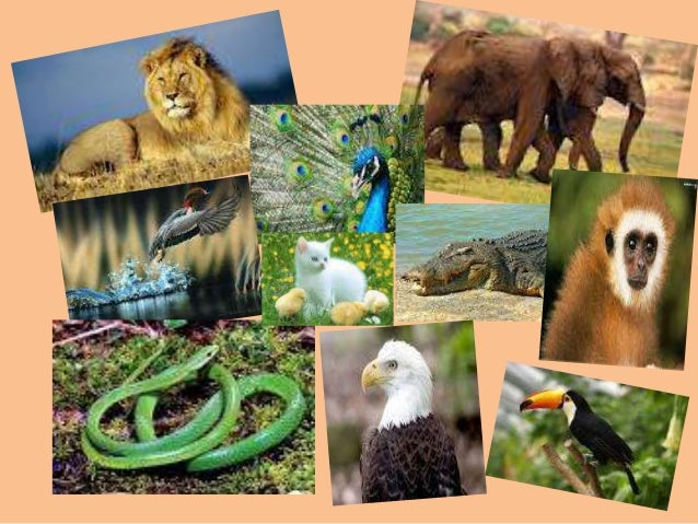 india s diverse wildlife and their conservation Describe the importance of biosphere with respect to the wildlife conservation policy of india it is immensely rich in wildlife and cultivated species, diverse.