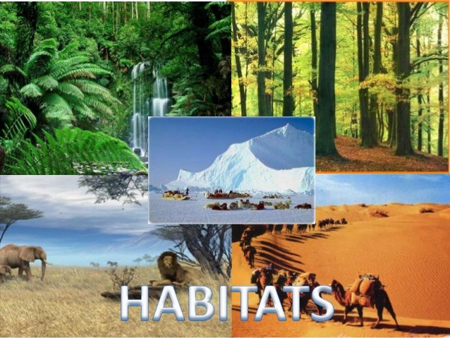 Habitats 2
