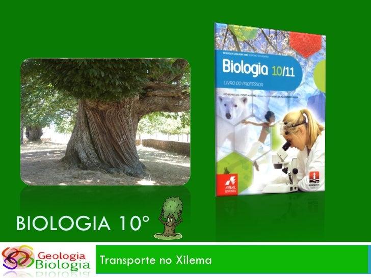 BIOLOGIA 10º        Transporte no Xilema