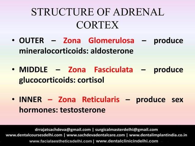 STRUCTURE OF ADRENAL CORTEX • OUTER – Zona Glomerulosa – produce mineralocorticoids: aldosterone • MIDDLE – Zona Fascicula...