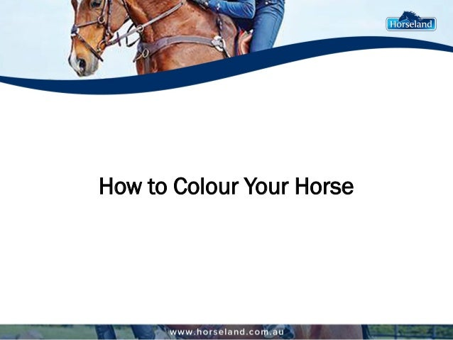 How to Colour Your Horse