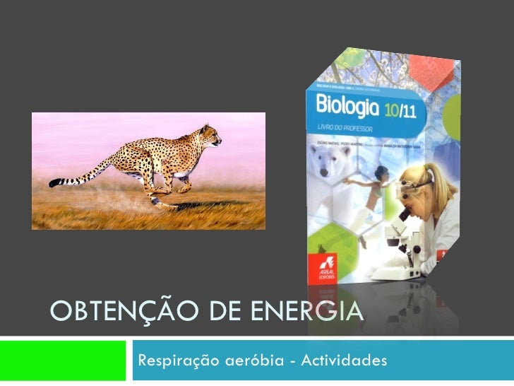 OBTENÇÃO DE ENERGIA  Respiração aeróbia - Actividades