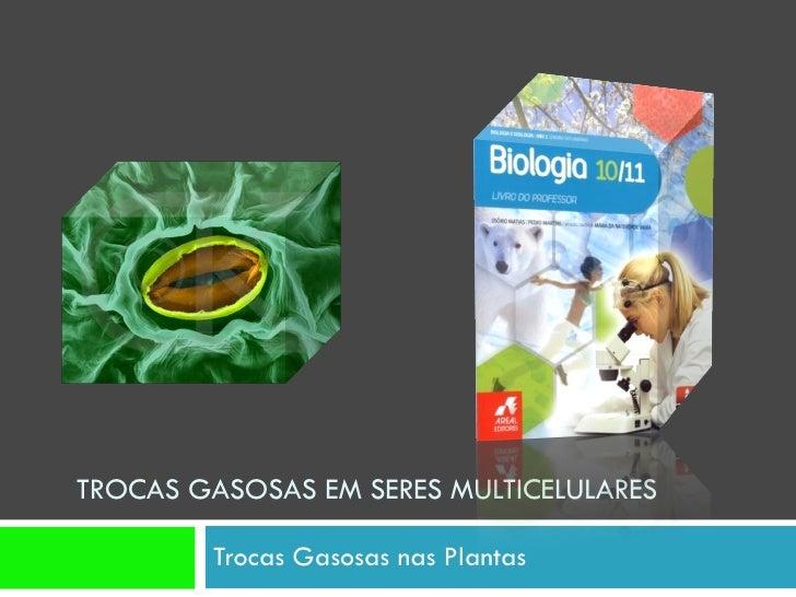 TROCAS GASOSAS EM SERES MULTICELULARES  Trocas Gasosas nas Plantas