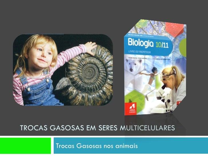 TROCAS GASOSAS EM SERES MULTICELULARES          Trocas Gasosas nos animais