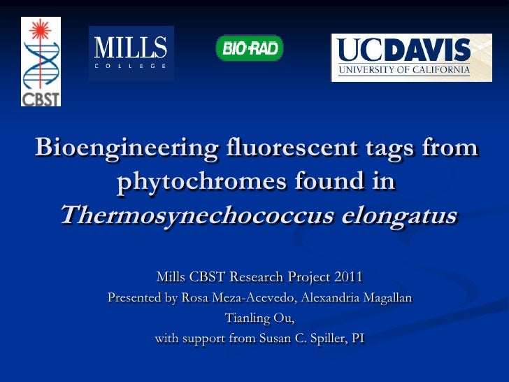 Bioengineering fluorescent tags from phytochromes found in Thermosynechococcus elongatus<br />Mills CBST Research Project ...