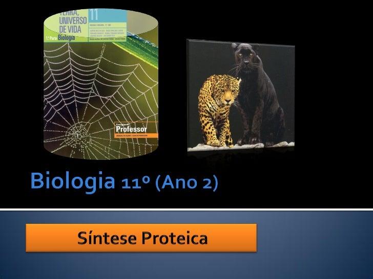   Popularmente são chamadas de panteras três tipos de     felinos: a pantera africana ou leopardo, a pantera     america...