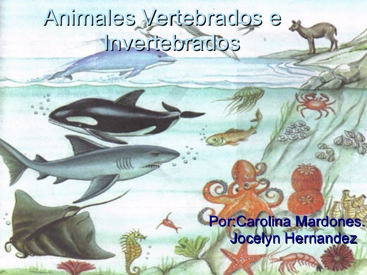 Por:Carolina Mardones. Jocelyn Hernandez   Animales Vertebrados e  Invertebrados