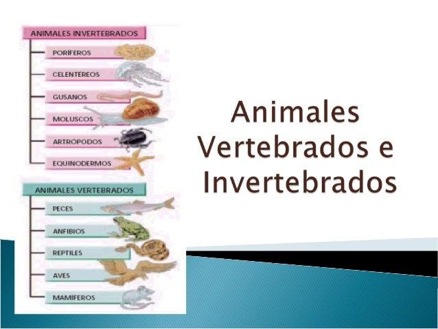 0ppt Animales Vertebrados E Invertebrados