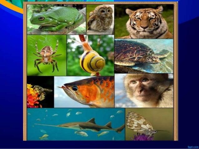 550 Gambar Hewan Invertebrata Dan Vertebrata Gratis Terbaik
