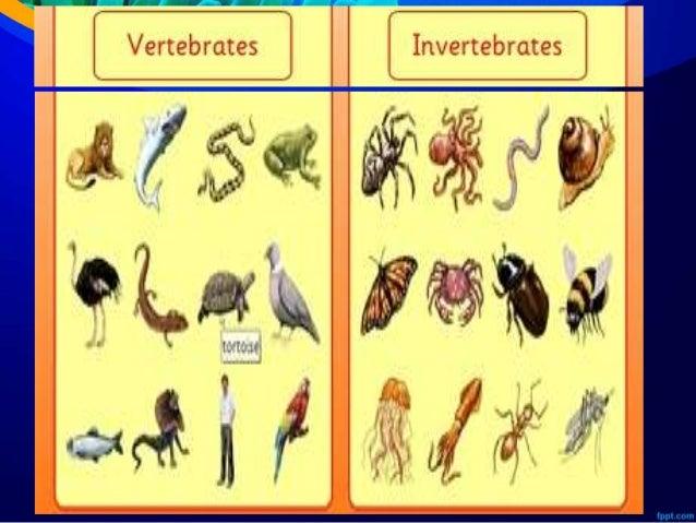 Ppt Avertebrata