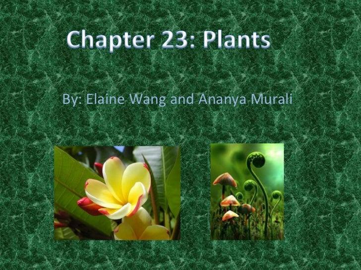 By: Elaine Wang and Ananya Murali