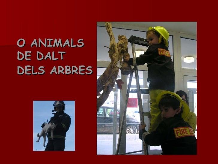 O ANIMALS DE DALT  DELS ARBRES
