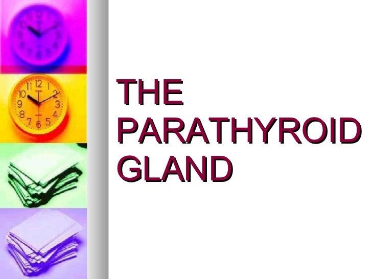 THE PARATHYROID GLAND