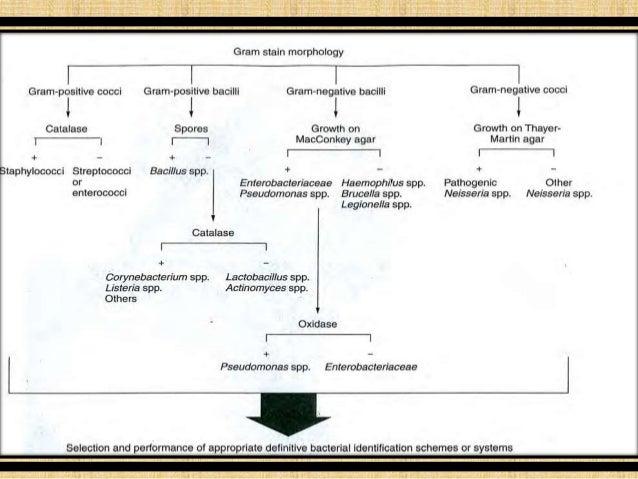 Identification of bacteria western blotting immune testing 20 ccuart Choice Image