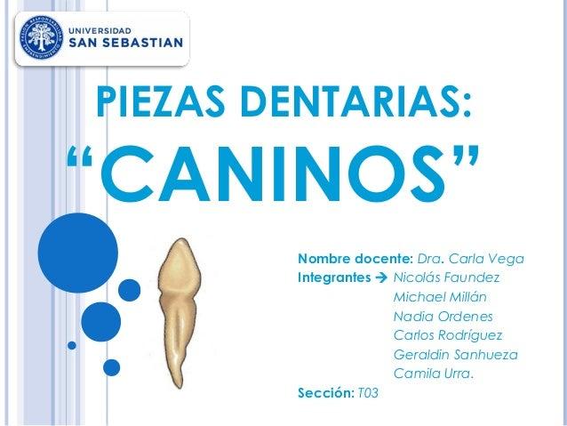 """PIEZAS DENTARIAS:  """"CANINOS"""" Nombre docente: Dra. Carla Vega Integrantes  Nicolás Faundez Michael Millán Nadia Ordenes Ca..."""