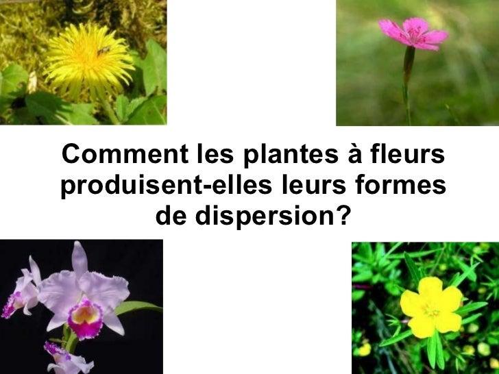 Comment les plantes à fleurs produisent-elles leurs formes de dispersion?