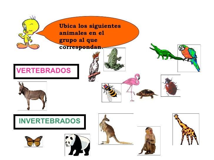 Ppt de animales vertebrados e invertebrados