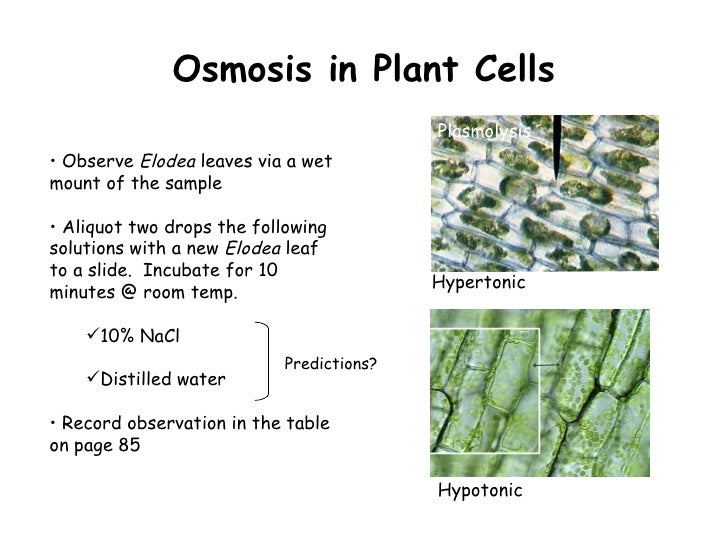 Ppt diffusion and osmosis